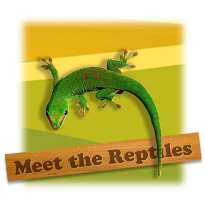 meet the reptiles